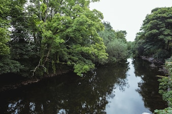 Green trees on lakeside