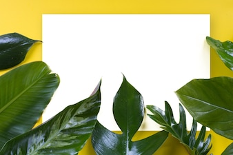 Green tropical leaf on yellow background design for eco background or jungle wallpaper background