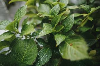 緑の濡れた葉