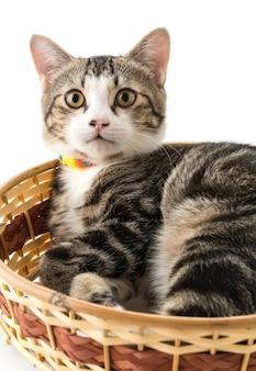 Grey cat in basket
