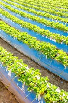 成長農業庭自然ガーデニング