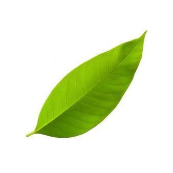 Growth close-up environmental lush natural