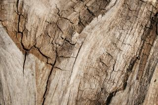 Grungy cracked wood