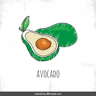 Hand drawn avocado