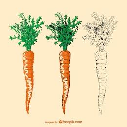 hand drawn carrot