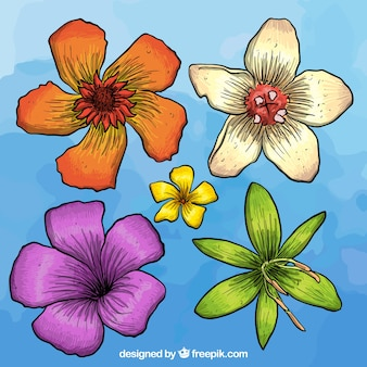Hand drawn colorful flowers