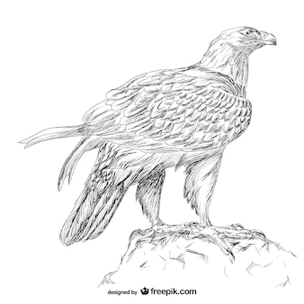 Hand drawn eagle vector