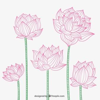 Hand drawn lotus flowers