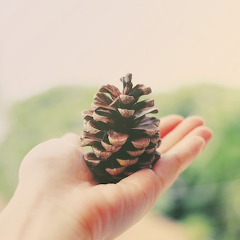 Hand holding pine cone with retro filter effect