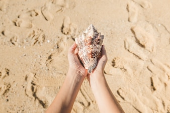 Hands holding a seashell on the beach