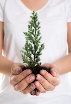 Hands holding a small pine