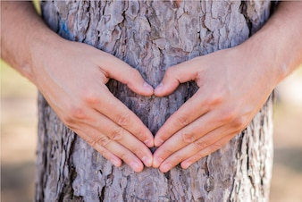 Hands making a heart shape on a tree. Treehugger. A nature lover environmentalist with arms wrapped around a pine tree and fingers formed in the shape of a heart.