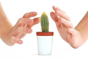 Hands with a cactus
