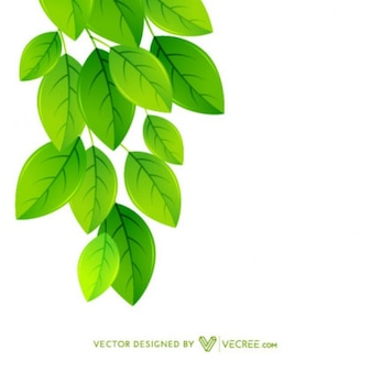 Hanging Leaves Background