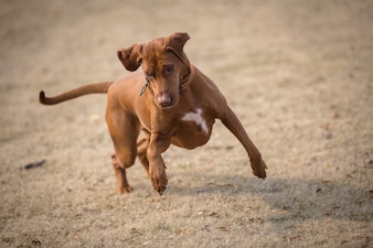 Happy pet dogs playing in a park