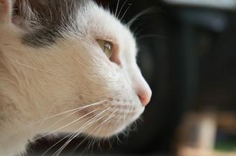 Голова кота крупным планом.