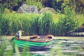Heron in the boat