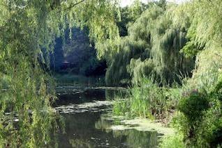 Hidden Swamp