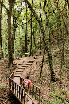 Hiker on a wooden path in the forest