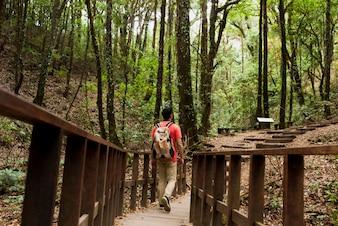 Hiker walking over a wooden bridge