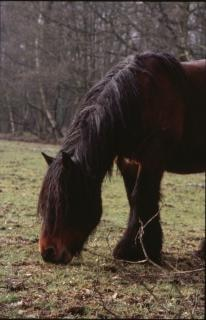 horse  animal  horses  pony