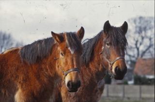 horses  horse  farm