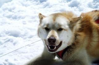 Huskies, freezing