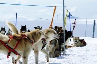 Huskies at mountain, mountain