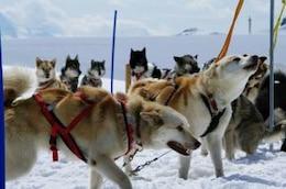Huskies at mountain, snow