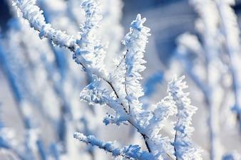 ice frost frosty hoarfrost freeze hoar cold