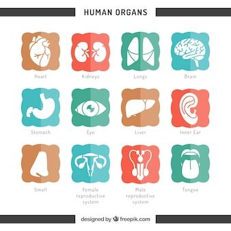 Icons of human organs