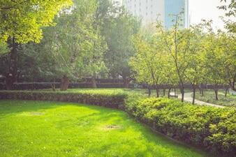 公園の早朝、暖かい日差しが葉を照らした
