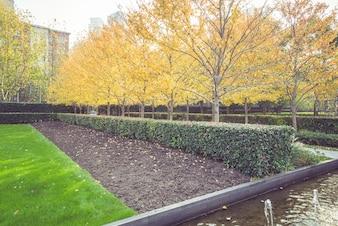 公園の早朝には、暖かい日差しが葉を照らし、秋に落ちる