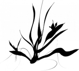 Java Ferns
