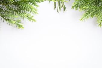 Juniper, Thuja twig Christmas border on white background
