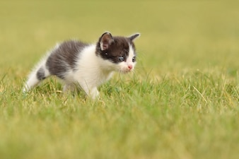 Kitten enjoying on the grass