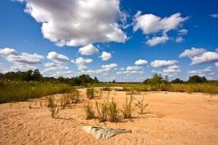kruger park landscape  landscape