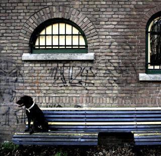 Labrador dog sitting on bench