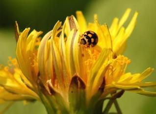 Ladybug, flowers, textile