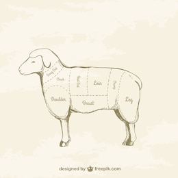 Lamb cuts drawing