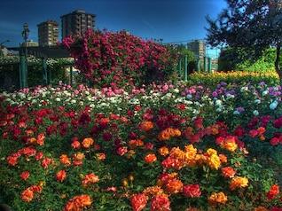 landscape flowers buildings garden istanbul park