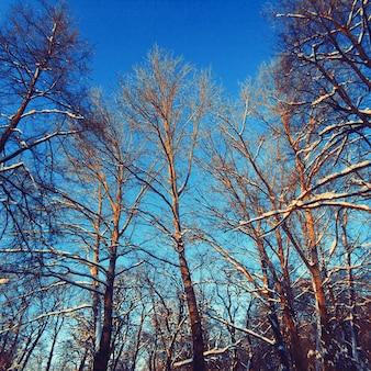Landscape leafless trees in winter