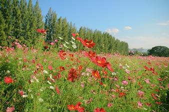Landscape of beautiful flowered field