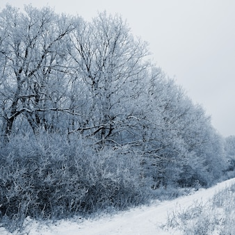 Landscape with trees in frost