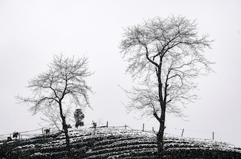 Landscape with two trees in black and white
