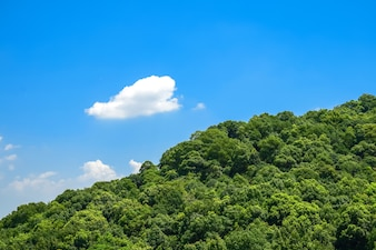 Large forest with a cloud