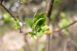 leaf  green  leaf  grow