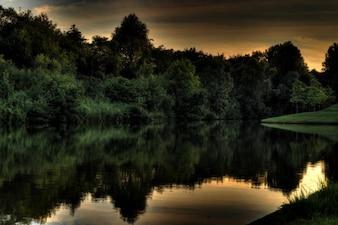 湖での緑豊かな森
