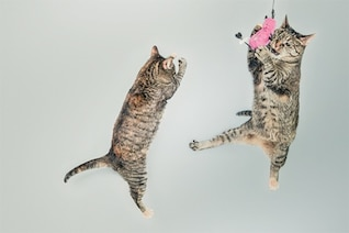 Little cats playing