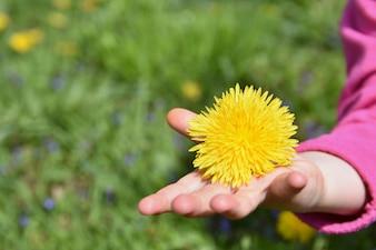 Маленькая девочка держит желтый цветок